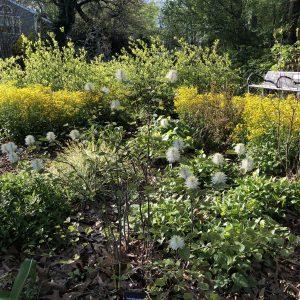 Centennial Garden 4.2021 IMG_3852 4