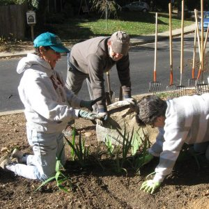 Centennial Garden Planting
