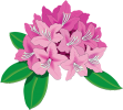 Pink rhododendron THC logo