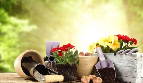 Flower pots, soil, tools and plants